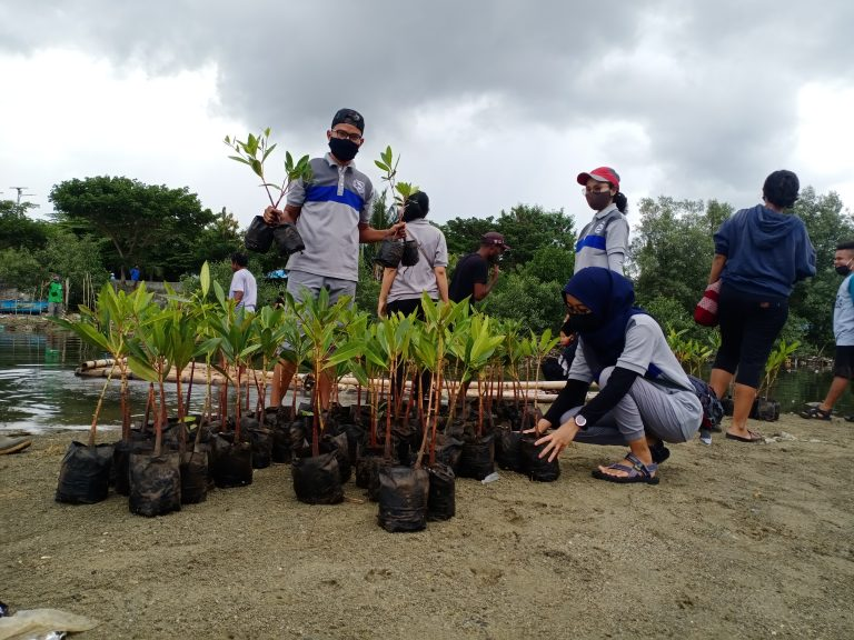 BBTNTC Melakukan Penanaman Mangrove di Teluk Sawaibu
