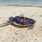 Kaleidoskop Taman Nasional Teluk Cenderawasih Tahun 2020