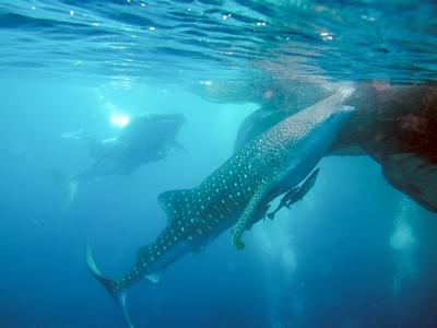 Workshop Pengelolaan Whale Shark Center